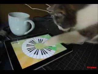 Котэ играет Реквием по мечте на Ipad!